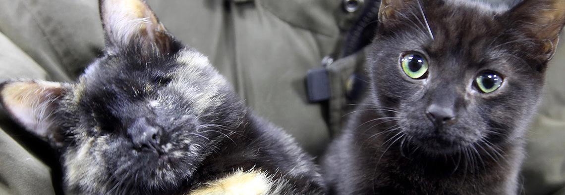 Brooklyn Bridge Animal Welfare Coalition| BBAWC| (718) 360-9918